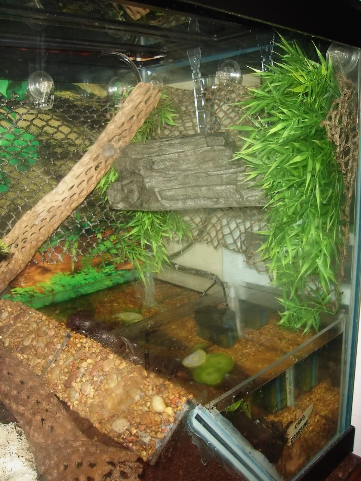 Hermit Crab Habitat