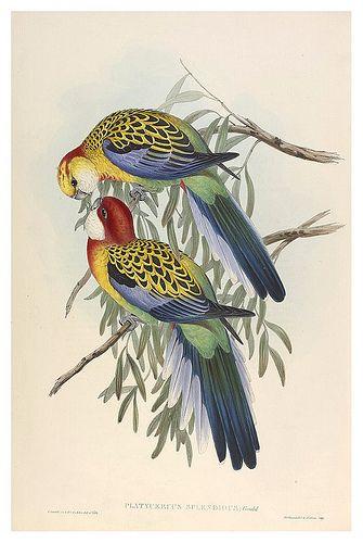 Fauna Australiana Dibujos De Aves Pinturas De Aves Pintura De Pajaros