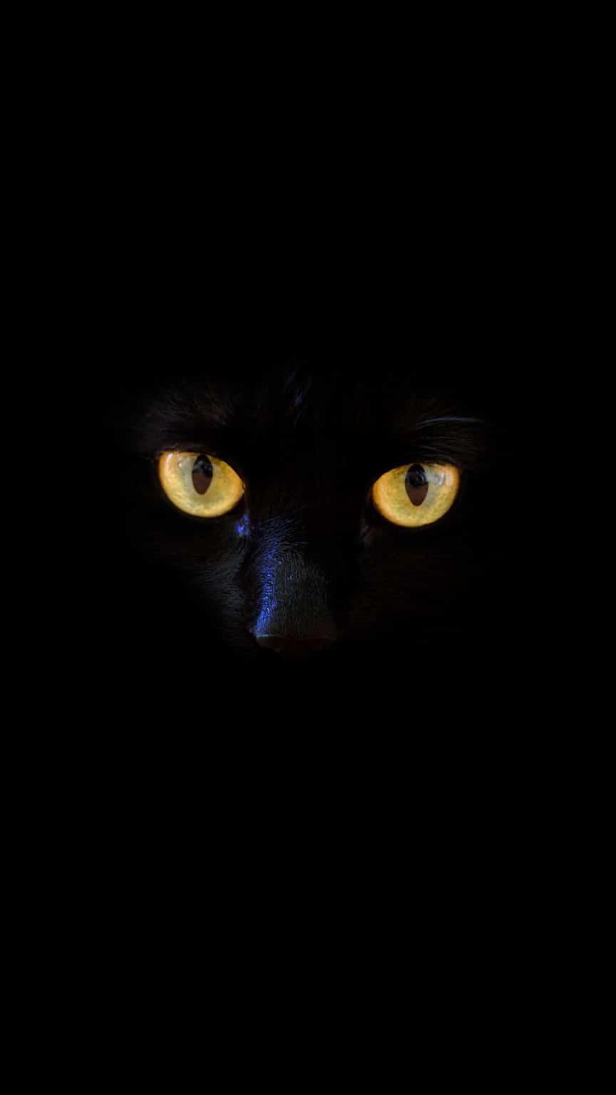 50 خلفية سوداء للايفون Cat Wallpaper Dog Wallpaper Cats