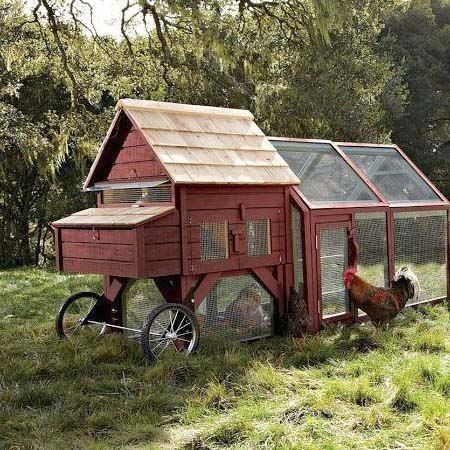 The chicken tractor pinteres for Cheap chicken tractor
