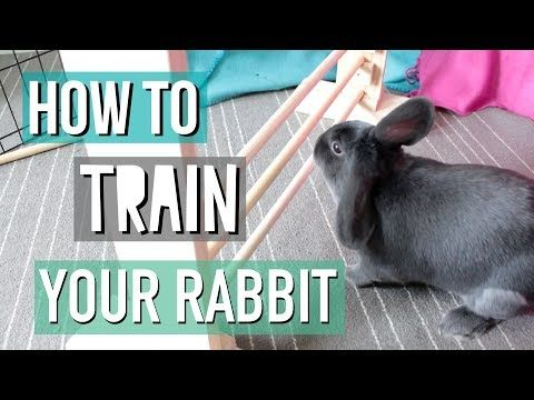 Youtube How To Teach Your Rabbit Tricks Other Bunny Stuff