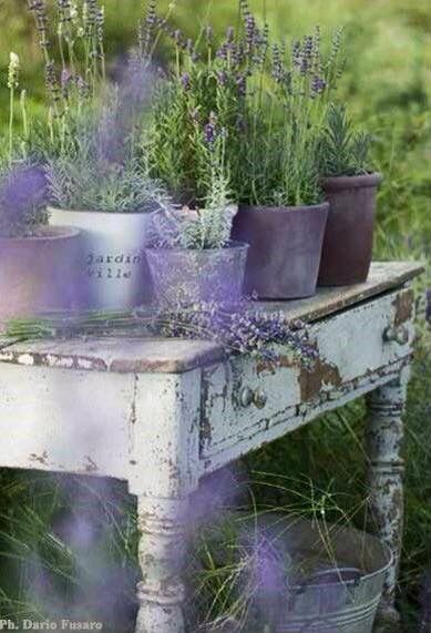 lavendel im garten flowers lavendel pinterest. Black Bedroom Furniture Sets. Home Design Ideas