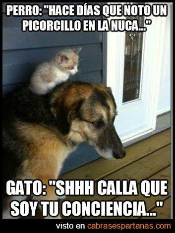 Conciencia En Un Perro Memes Espanol Graciosos Chistes De Animales Humor Divertido Sobre Animales
