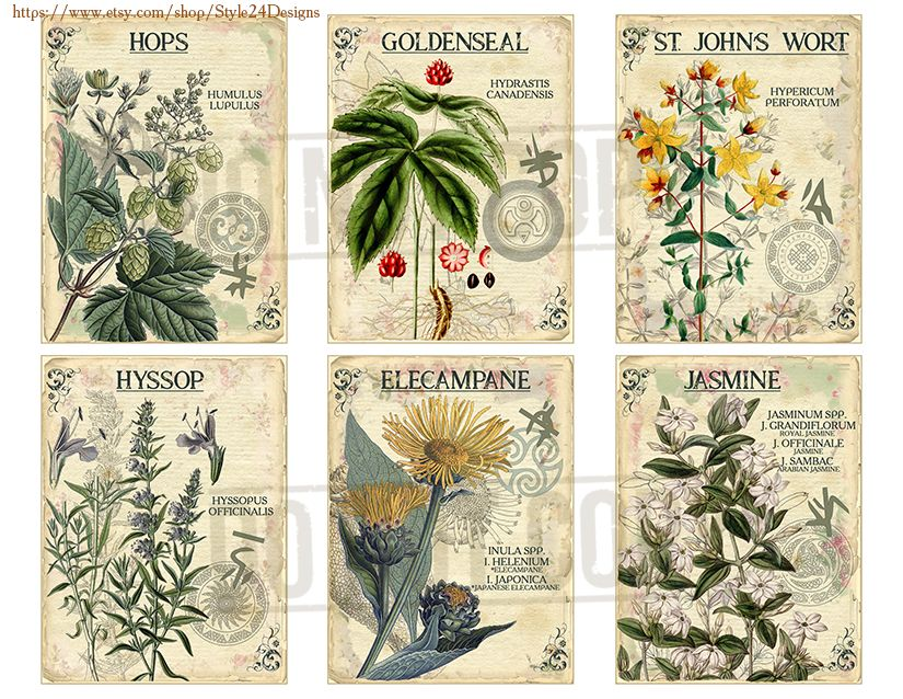 Vol 3 Herbal Index Double Sided Scrapbook Ephemera 3x4 Journaling Cards Digital Collage Printable Apothecary Medicinal Herbal Herbarium Goldenseal Journal Cards Herbalism