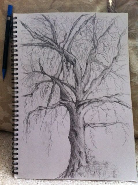 Winter tree pencil sketch