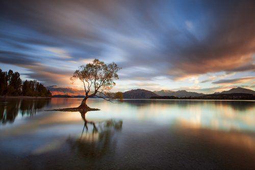 Enchanting Trees Photo Challenge