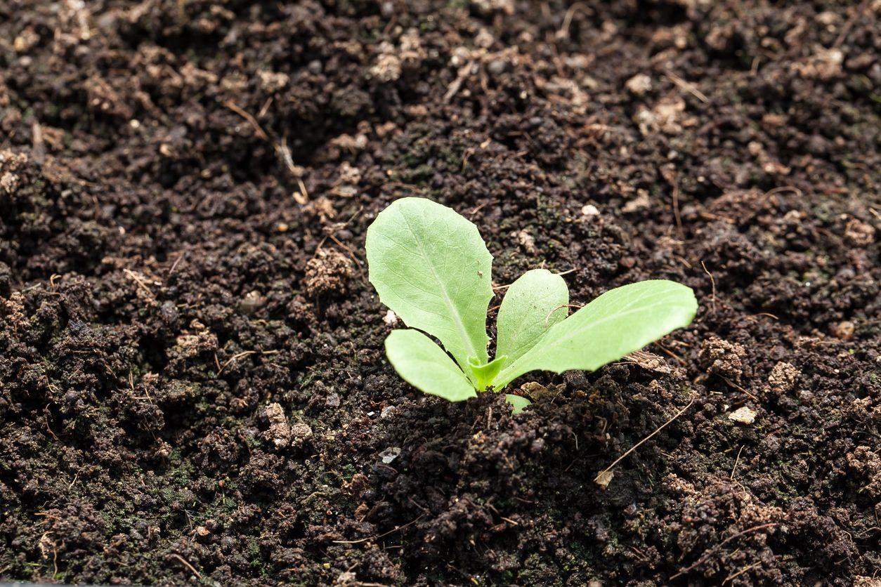 Zone 7 Vegetable Planting: When To Plant Vegetables In ...