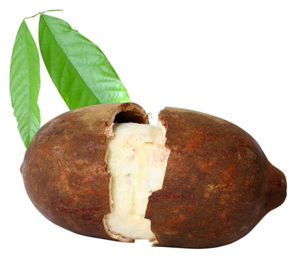 exotisches obst cupuaçu kakaobaum