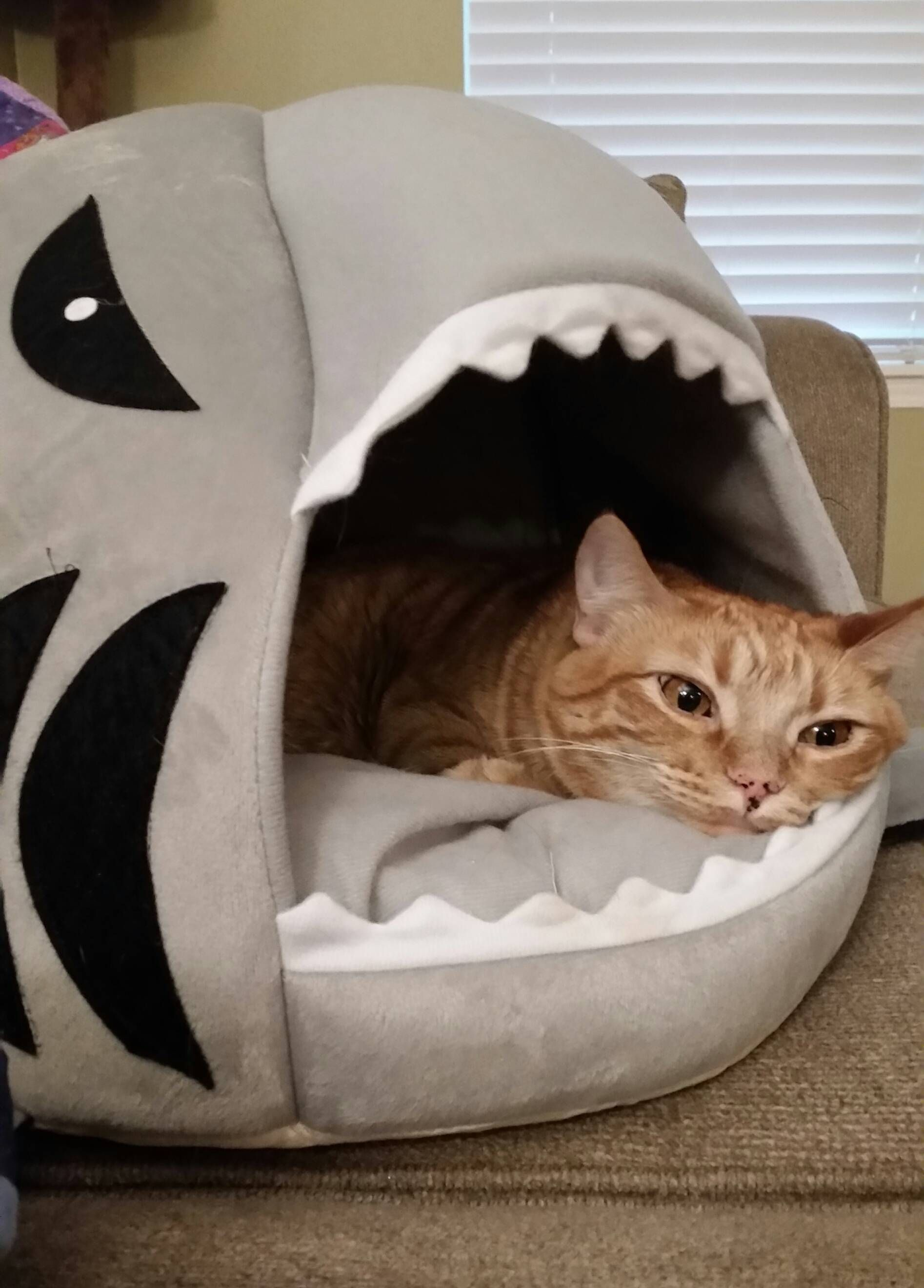 Life is rough when you have to sleep in a shark bed see