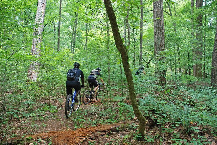 Chicopee Woods Mountain Bike Trail