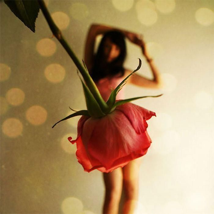 photo shoot ideas for women | rose | Women Photo Shoot Ideas