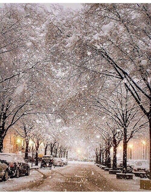 trees, snow, winter, street, light.