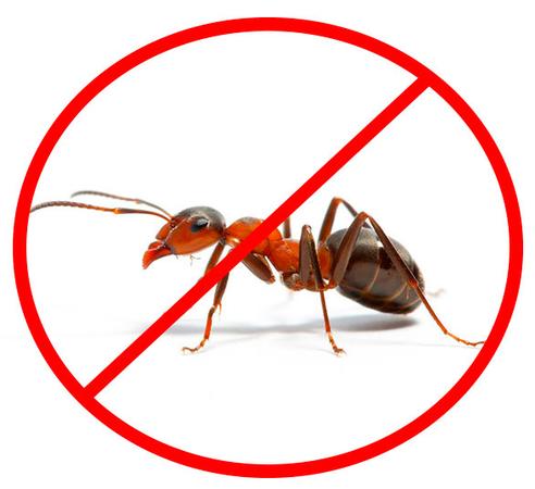 5 СПОСОБОВ ИЗБАВИТЬСЯ ОТ МУРАВЬЕВ!!!1. Муравьи не переносят резких запахов. Для их отпугивания на муравейникможно положить голову копченой селедки, разрезанный зубчики чеснока,ботву томатов или петруш…