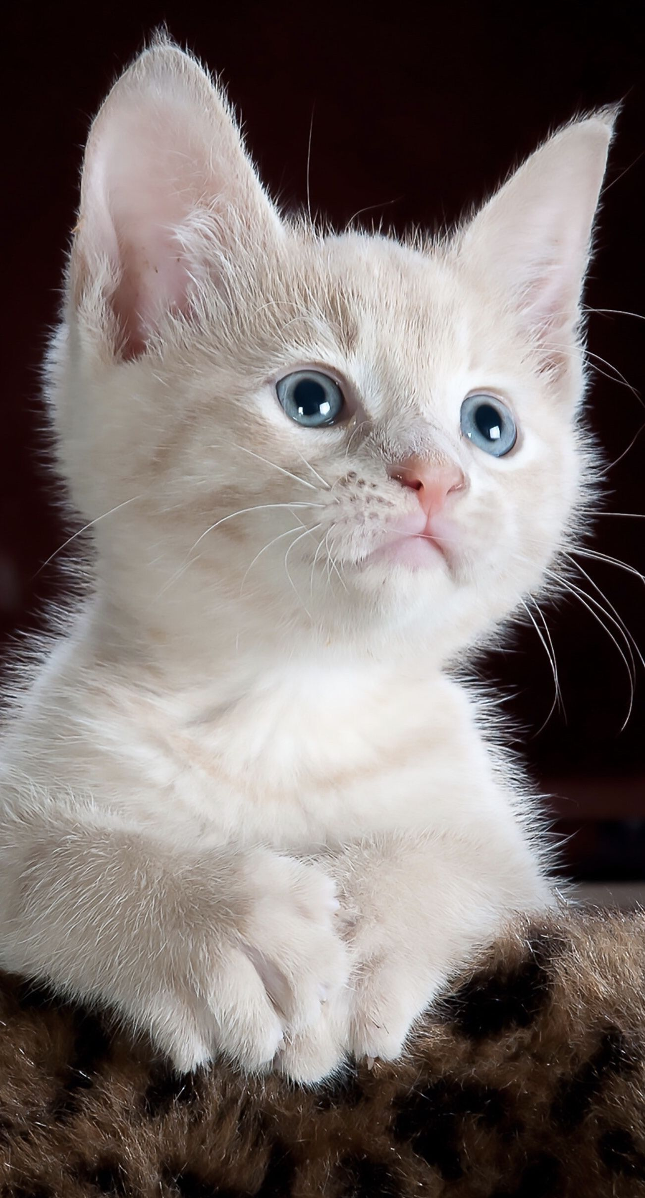 Life Isn T All Rainbows And Kittens Fiction Shouldn T Be Either Read Jeff Berney S Latest Blog Post About Why He Hates The Holl In 2020 Cat Care Pets Best Cat Breeds