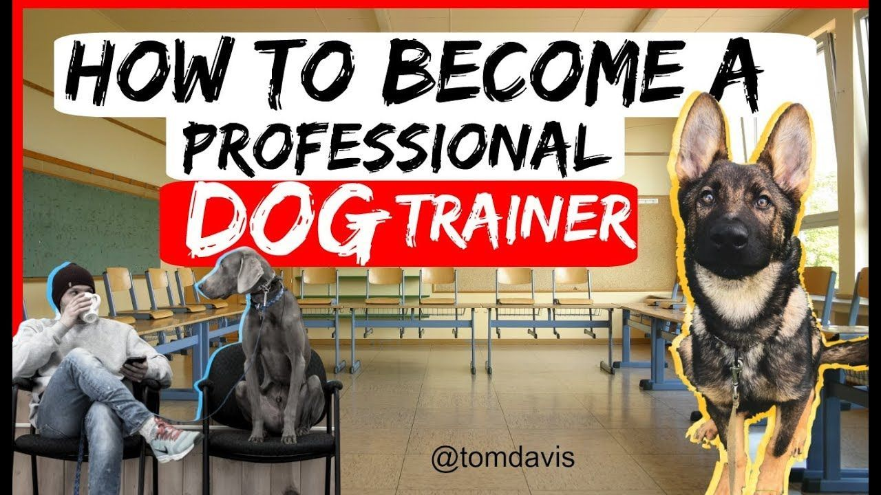 Unique Dog Toys How To Become A Professional Dog Trainer Everything You Need To Know To Become A Dog Tr In 2020 Dog Trainer Become A Dog Trainer Working Dogs Breeds