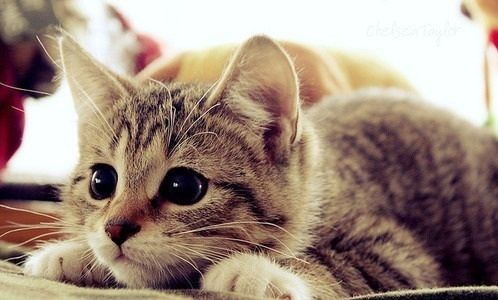 Tumblr Photography Kucing