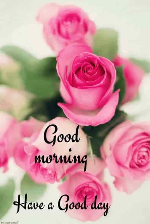 150 Beautiful Good Morning Images Best Collection Good Morning Roses Good Morning Images Flowers Good Morning Flowers