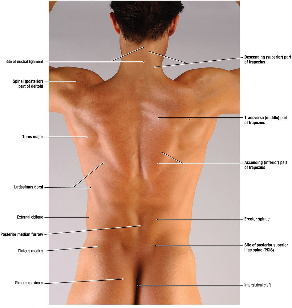 Coracoid Process Vs Acromion Process Surface Anatomy Google Search