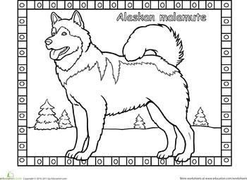 Alaskan Malamute Coloring Page Coloring Pages Malamute Alaskan Animal