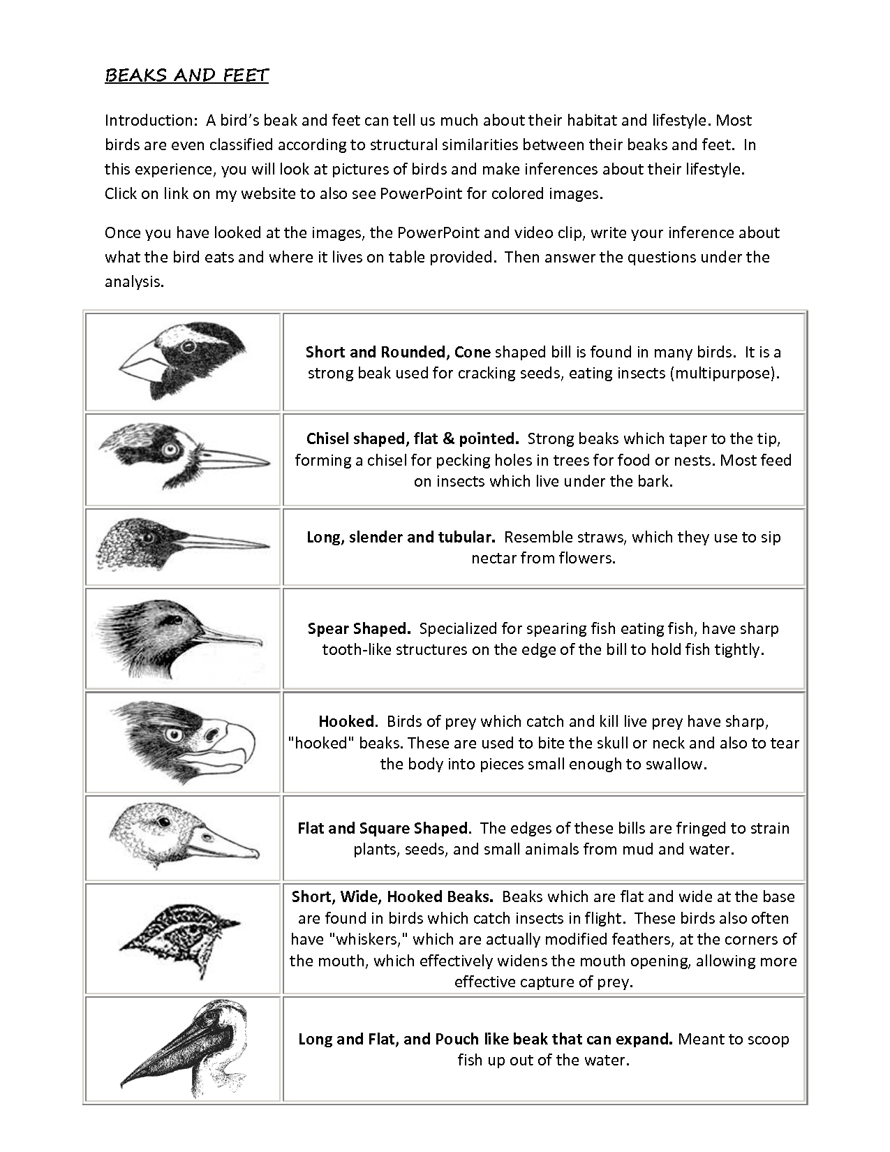 Types Of Birds For Kids