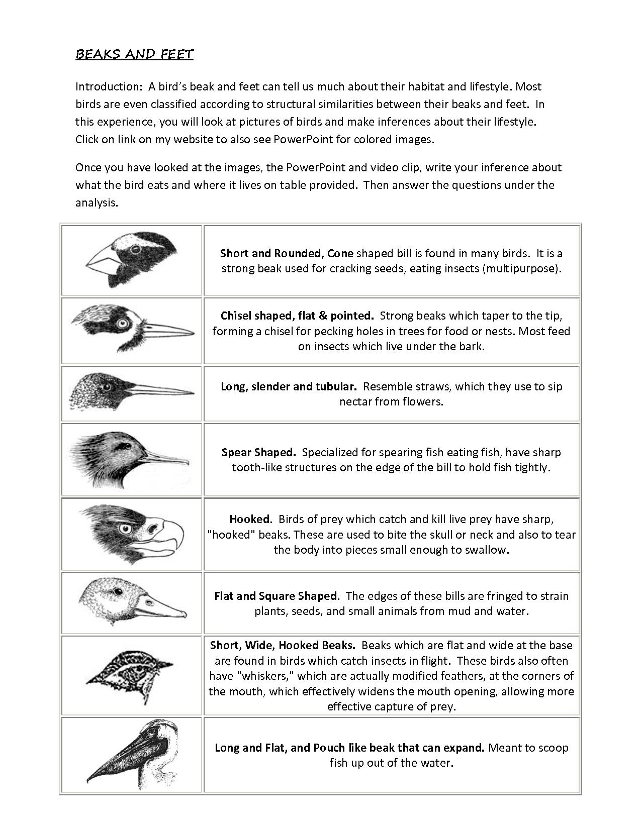 Worksheets Adaptation Worksheet evolution adaptation matching worksheet google search bente types of birds for kids search