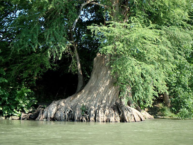 Day trips guadalupe river four swimming holes on the