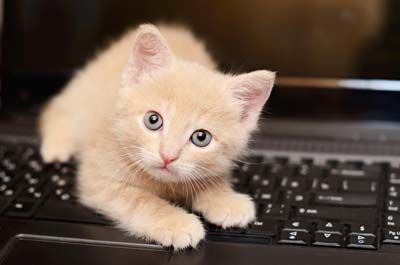 Kitten On The Computer