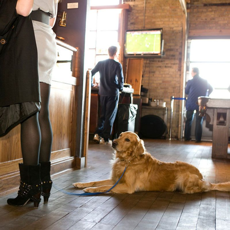 Dogs Are Treated Like Royalty At The Iron Horse Hotel In Milwaukee