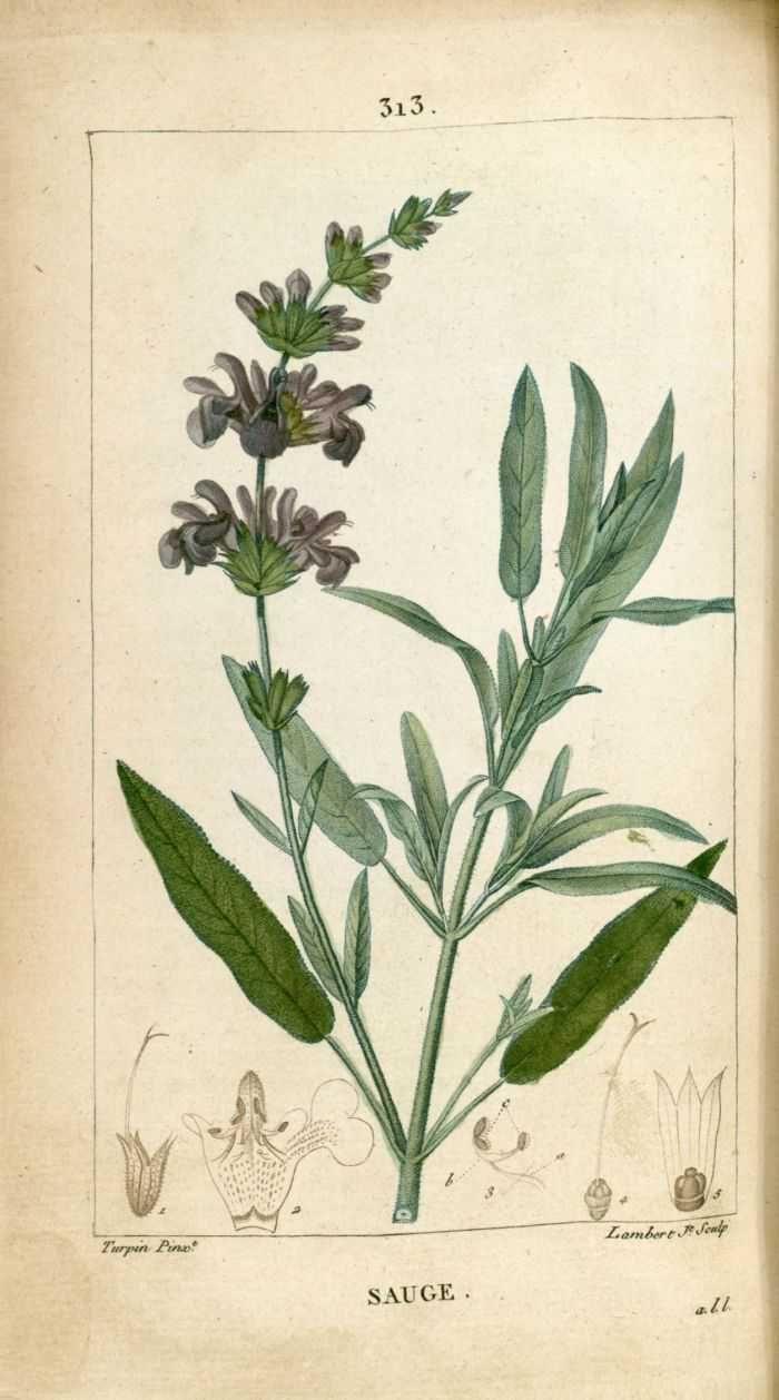 anciennes flore m dicale tires de flore m dicale chaumeton chamberet paris 1816. Black Bedroom Furniture Sets. Home Design Ideas