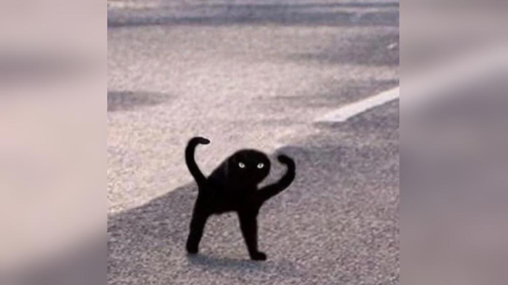 black cat meme Google Search Black cat memes, Crazy