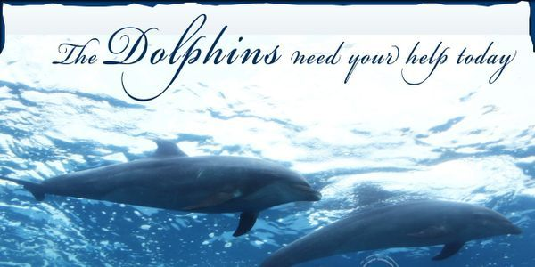 Action for Dolphins