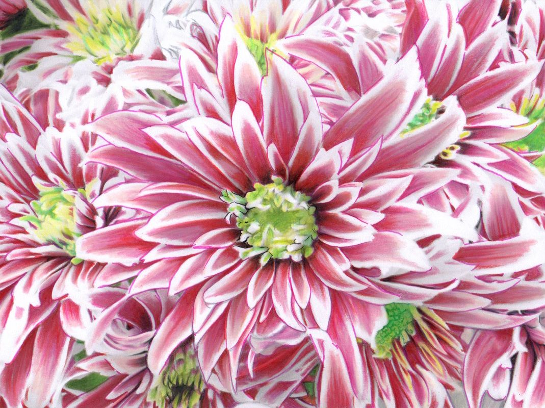 View the different ways people have colored the chrysanthemum