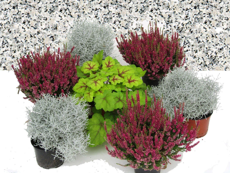 Grabbepflanzung Set Urnen- oder Einzelgrab Wechselbepflanzung rot-weiß-winterhart #friedhofsdekorationenallerheiligen
