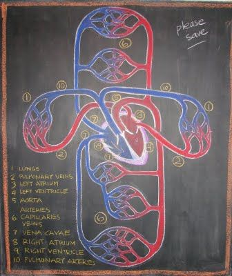 The Waldorf Way blog - Dr. Rick Tan grade 7 physiology ...