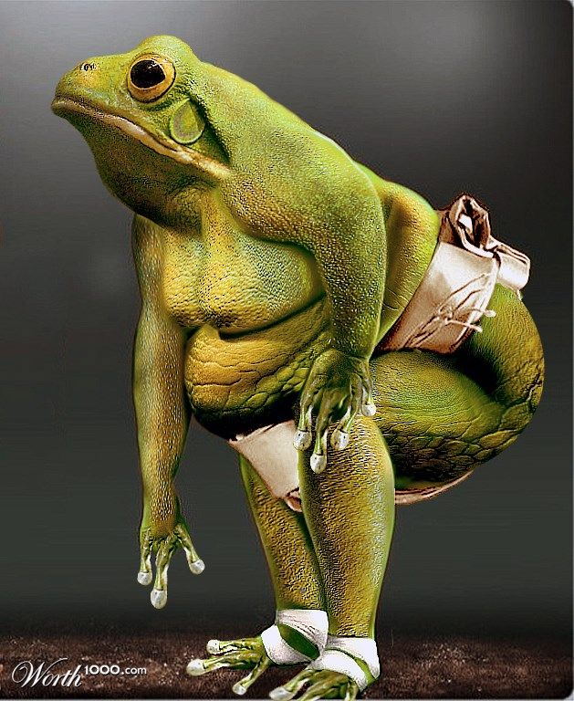 Смешное фото спящей жабы орудия
