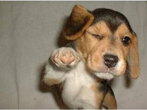 Winking Dog Funny Animal Memes Funny Animals Animal Memes