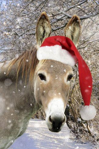 Donkey Wearing Christmas Hat in Snowy Scene Valokuvavedos AllPosters.fi-sivustossa
