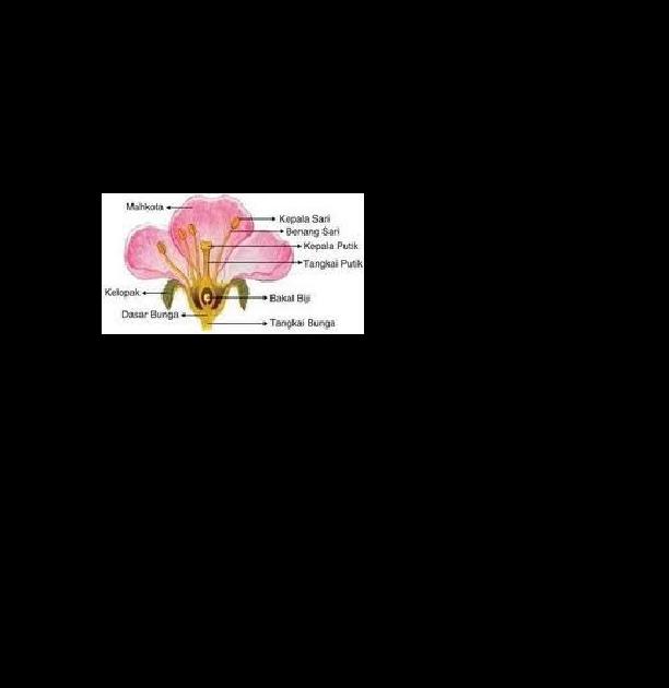 Gambar Struktur Organ Bunga Sempurna Doc Sistem Reproduksi Pada Tumbuhan Hai Tomi Academia Edu Apa Saja Fungsi Dan Bagian Yang T Di 2020 Bunga Gambar Kembang Sepatu