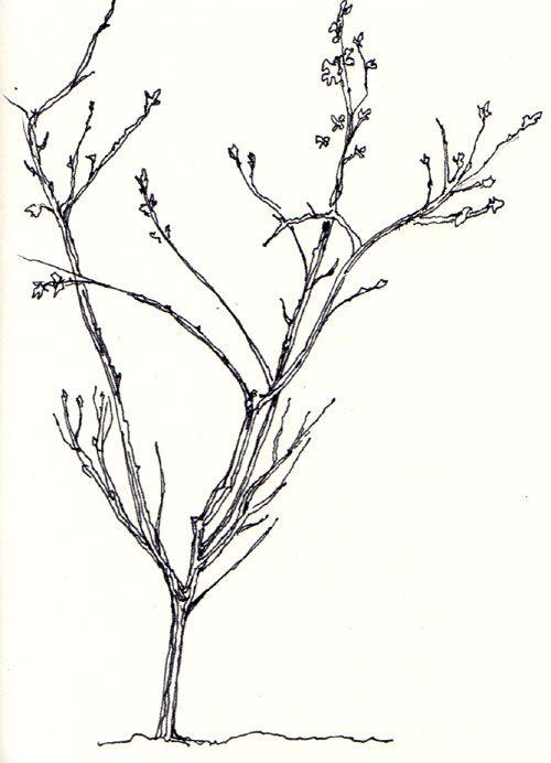 Pen, Pencil, Paper—Draw!: Trees | Tree drawings pencil, Christmas tree drawing, Simple christmas ...