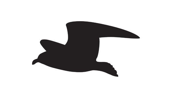 seagull Silhouette | silhouette flying seagull: Adobe ...