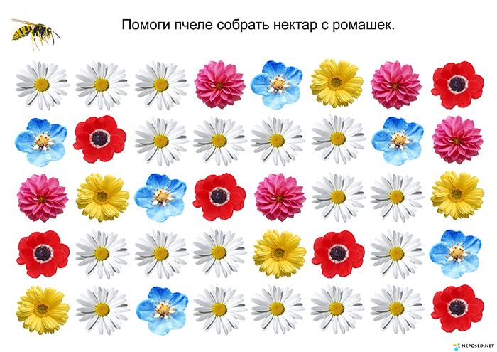 задания и игры на тему цветы | Цветы, Трафареты, Весна