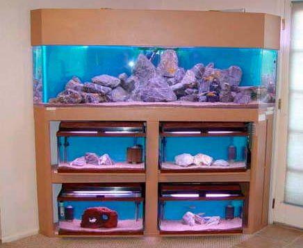 Fish Tank Stand Unique Tanks