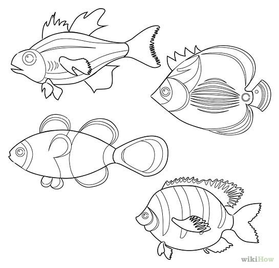 Tropical Fish Outline Drawing