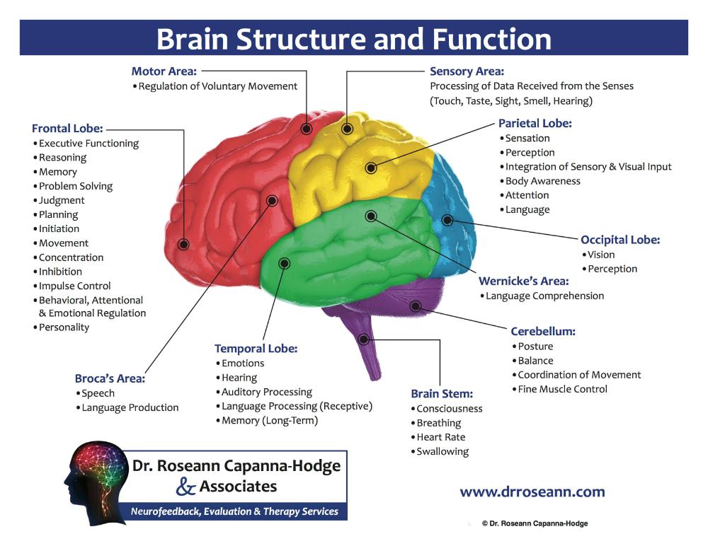 Neurofeedback Therapy in Connecticut | Neurofeedback ...
