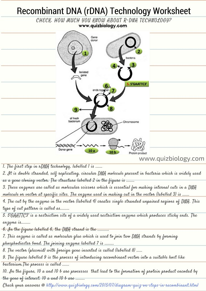 Recombinant DNA Technology Worksheet – Biochemistry Worksheet