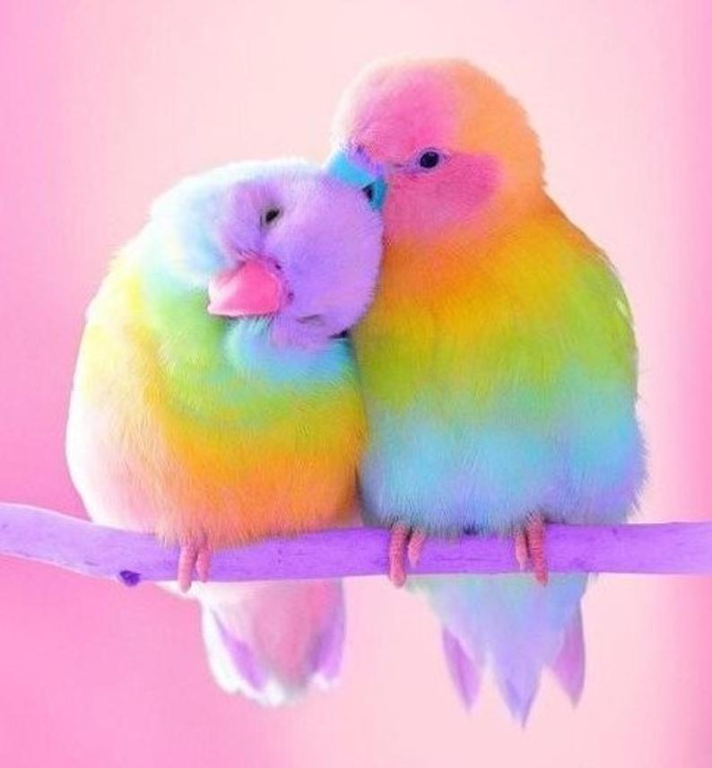 Love Birds Cross Stitch Pattern Instant Download Pdf Animals Beautiful Beautiful Birds Pretty Birds