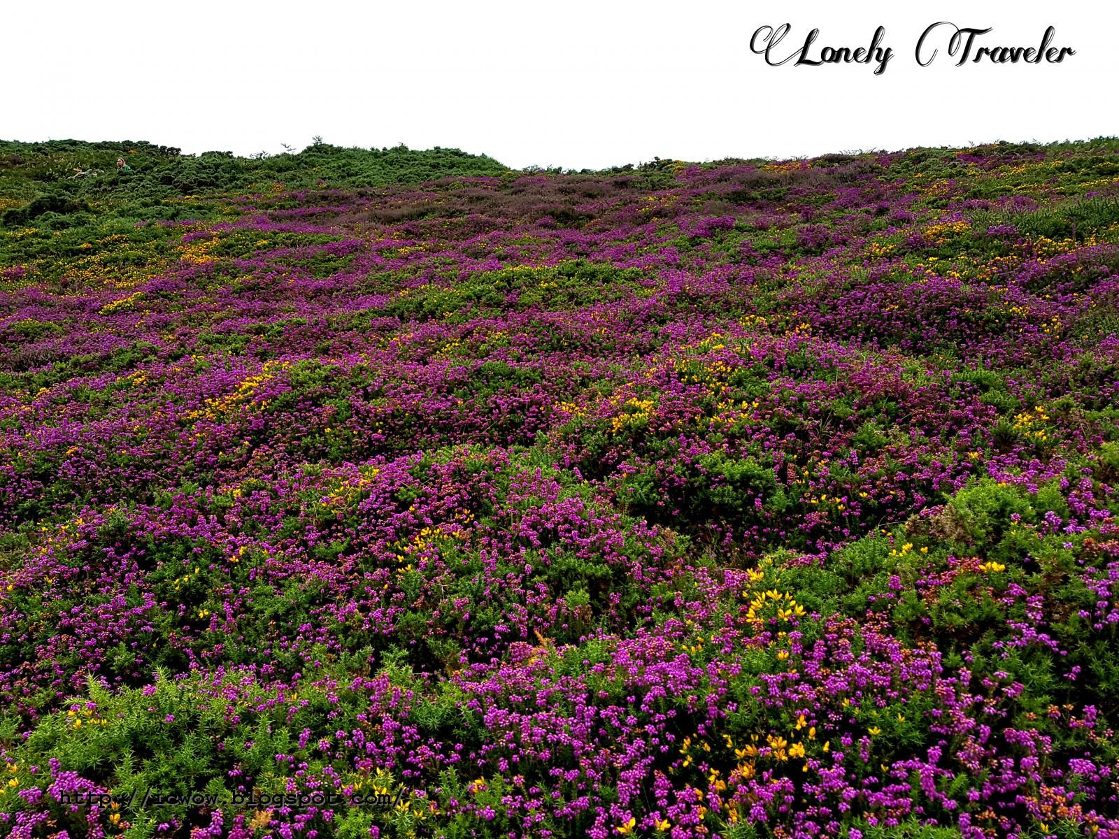 Cliff Walking At Howth Ireland Ireland Pinterest Flowers And