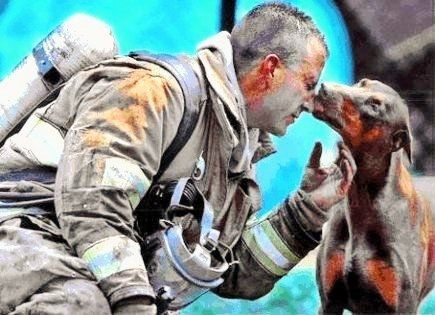 "Souls Without Voices on Twitter: ""🌿Thank You To all the heroic Dogs who serve their country, & during #Sept11 #NYC terrorist attacks🐾💝🐾#NeverForget🐶🐾💖 https://t.co/dWYd90saOV"""