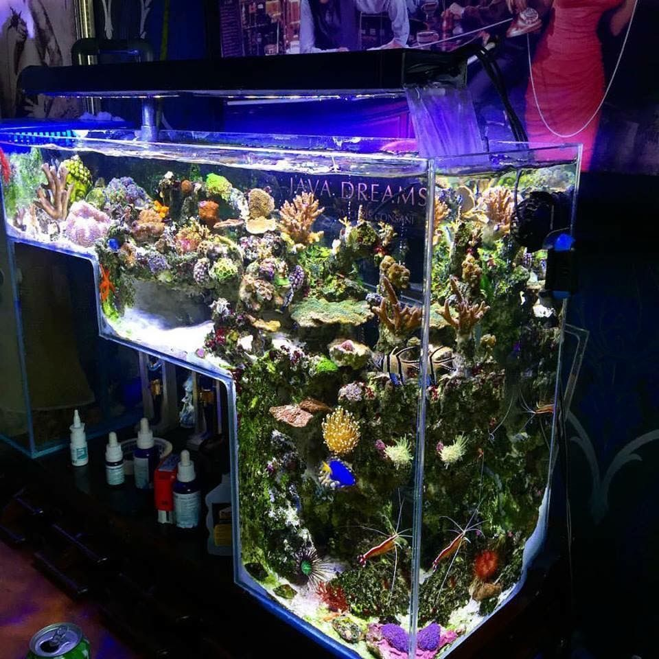 Aw yis drop off tanks betta fish tank pinterest drop for Aquarium 20 litres poisson rouge