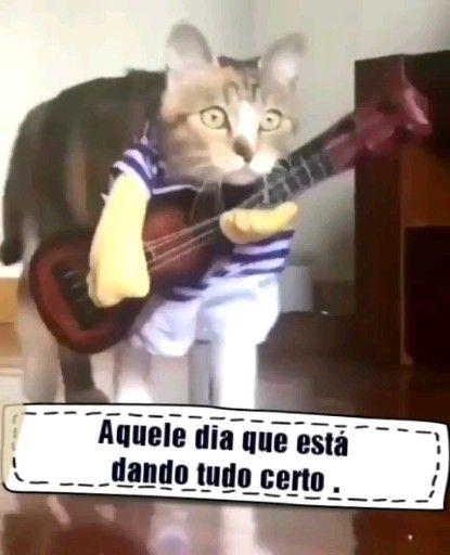 Photo of Love gatinho ❤